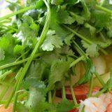 アジアン好き必見レシピ!エビと春雨のタイ風パクチーサラダ