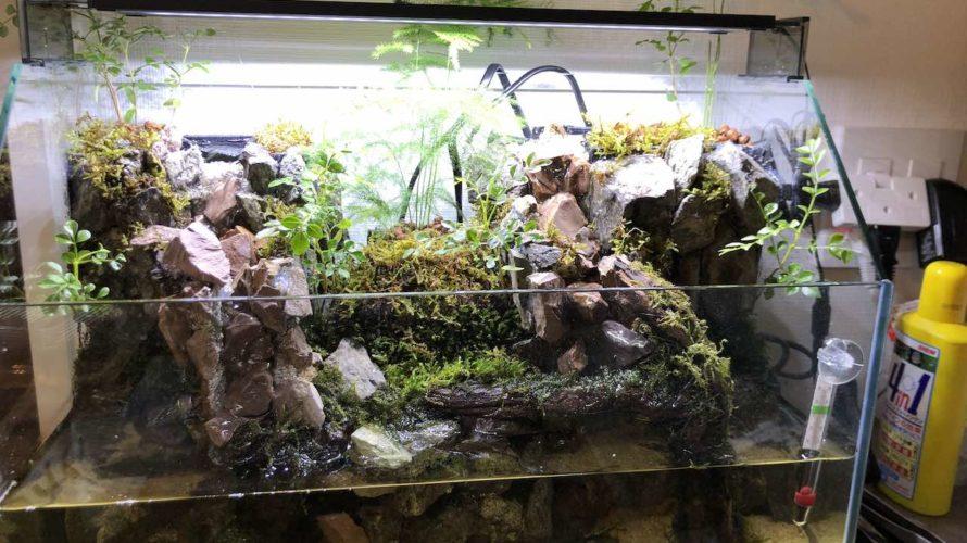 【アクアテラリウム】滝のあるアクアテラリウム水槽立ち上げ⑤〜植栽〜