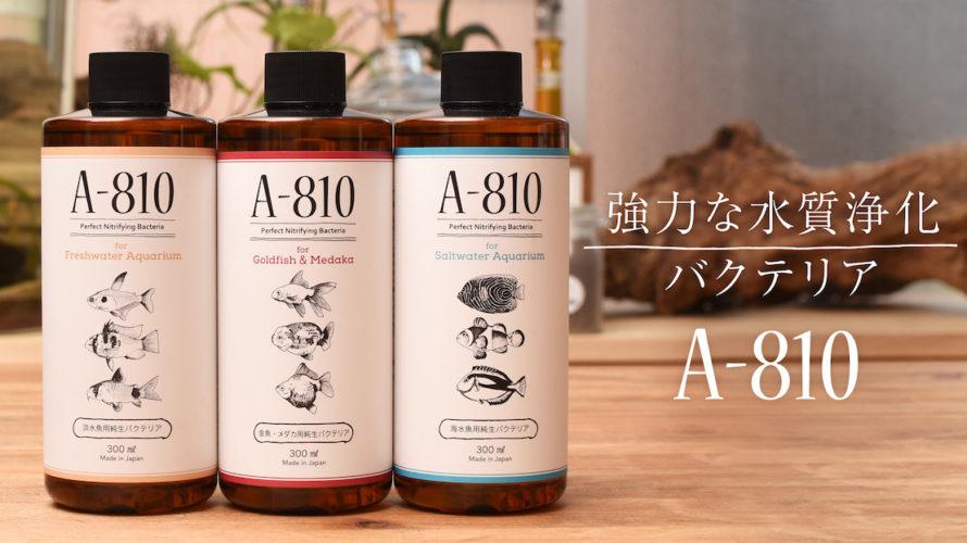 【アクアテラリウム】 メダカの死の連鎖を解決!!メダカ用純生バクテリアA-810が凄くよい!