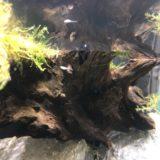 【アクアテラリウム】メダカの稚魚の生存率をあげる3つのポイント